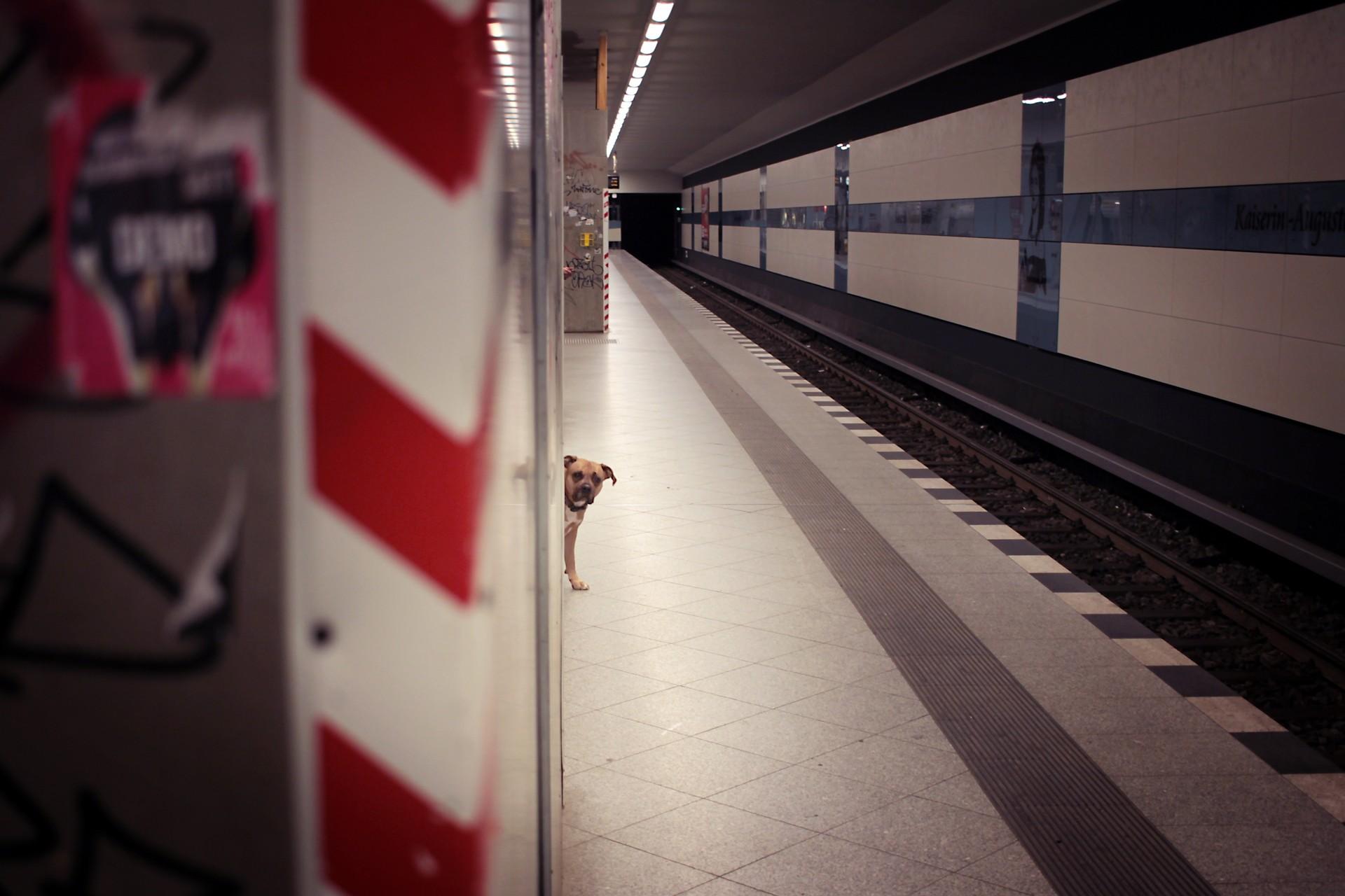 dog-station
